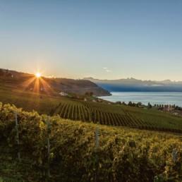 N° 0800-2015- Lever de soleil dans les vignes de Lavaux