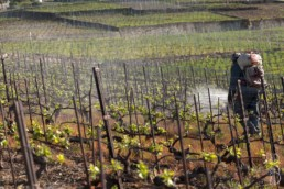 N° 085-2015_traitements de la vigne