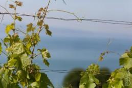 N° 1055-2015_Vigne de Lavaux