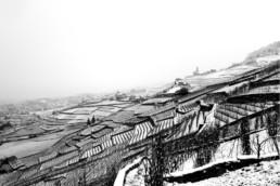 N° 1121-2015_Lavaux en noir et blanc