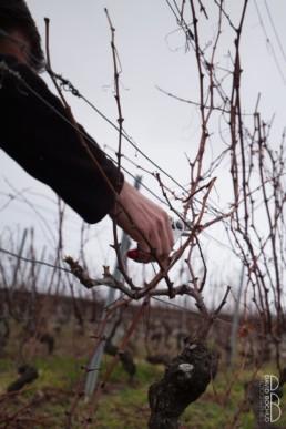 N° 1542_2015_Taille de la vigne en Lavaux