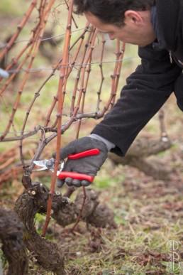 N° 1615-2015_Taille de la vigne
