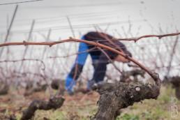 N° 1640-2015_Palissage de la vigne