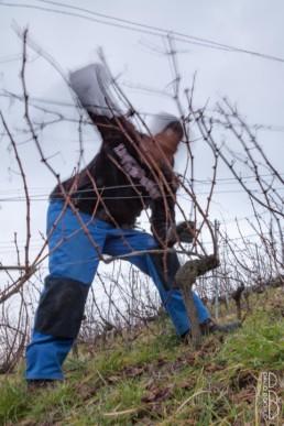 N° 1708-2015_Taille de la vigne_Lavaux