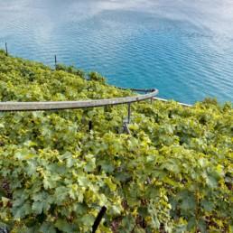 N° 1903_32-2015_plongée dans le lac léman depuis les vignes de Lavaux